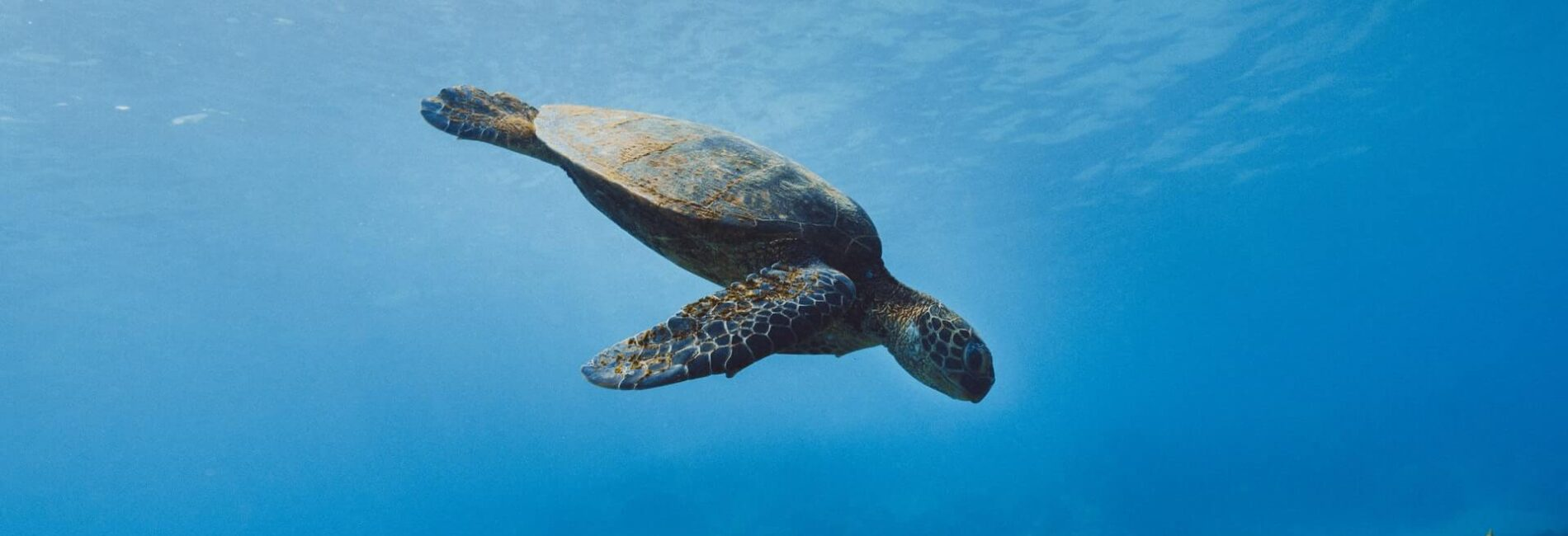 Did You Know–Pet Turtles May Cause Fatal Salmonella Infections