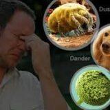pollen-2random%
