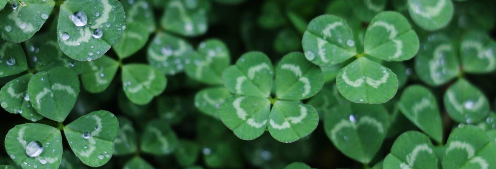 Celebrate St. Patrick's Day with a Green Irish Breakfast